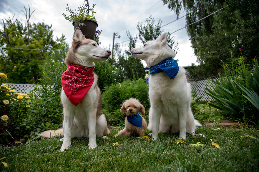Great Dog Articles of the Week