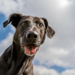 Do We Put Too Much Emphasis on Our Dogs Past?