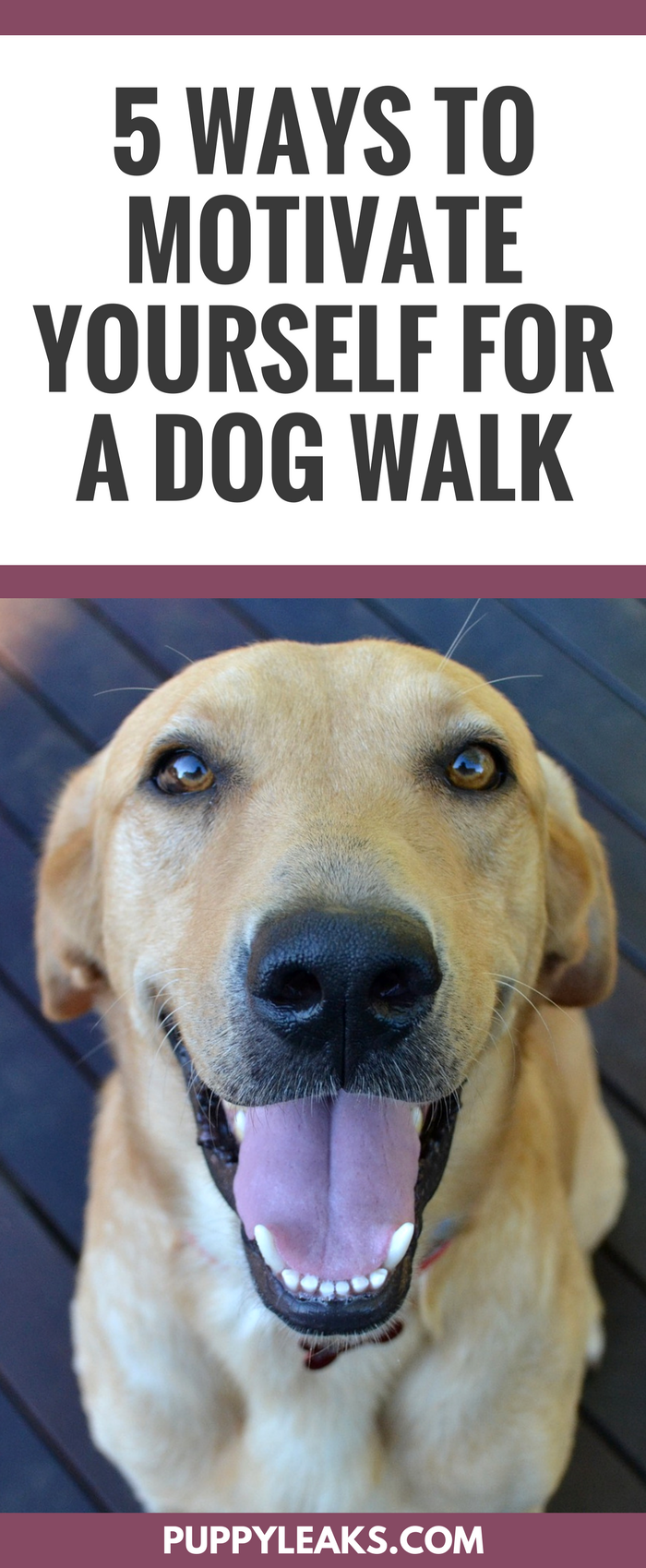 5 Ways to Motivate Yourself for a Dog Walk. Dog walking tips to make your daily walk more fun and enjoyable.