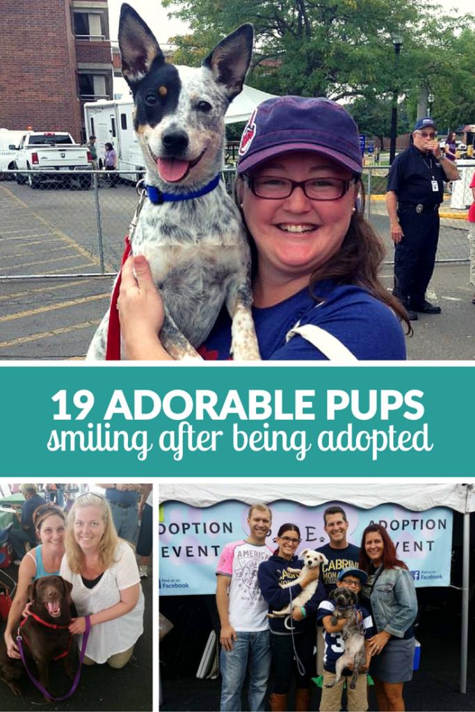 Shelter Dogs Smiling