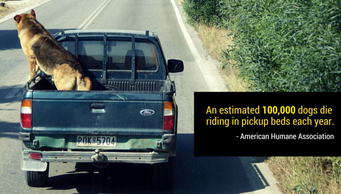dogs in the back of pickup trucks