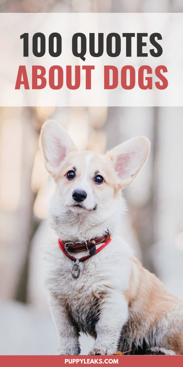 100 Of The Best Dog Inspired Quotes Puppy Leaks