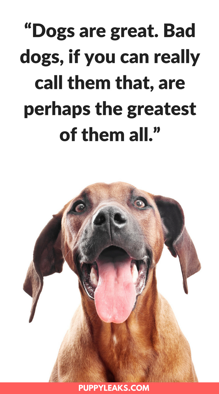 100 Of The Best Quotes About Dogs