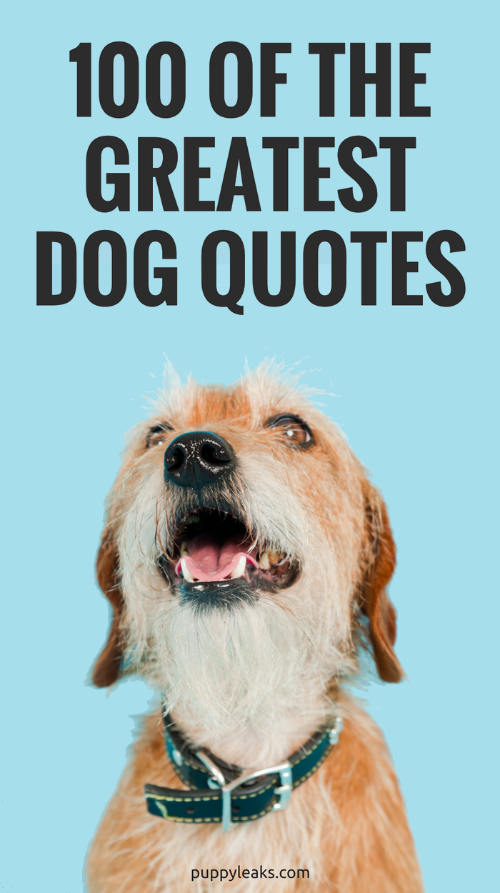 100 Of The Best Dog Quotes