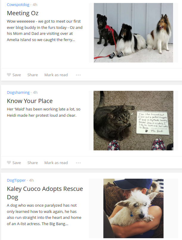 bloglovin dog news
