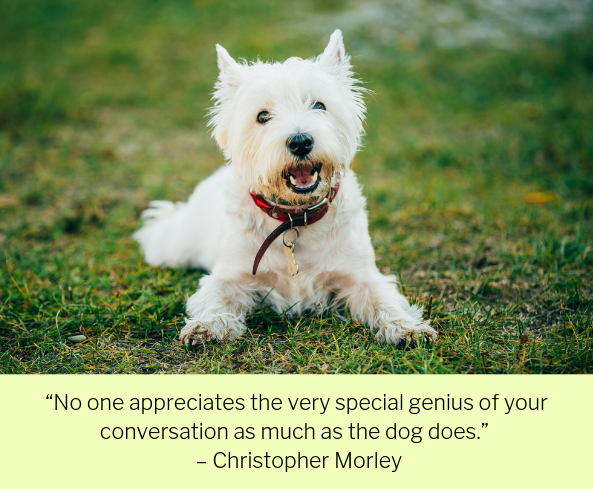 100 Quotes About Dogs