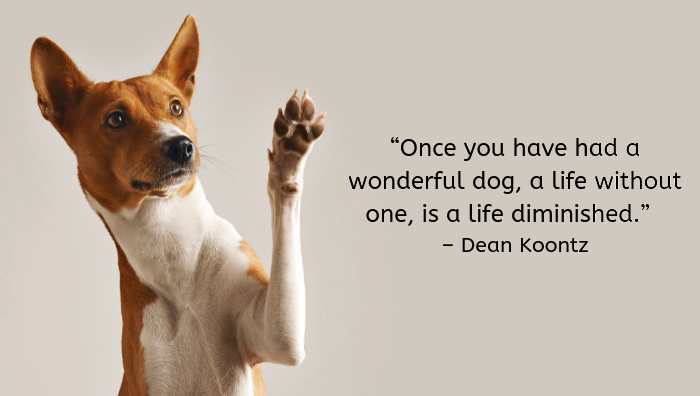 100 Great Quotes About Dogs