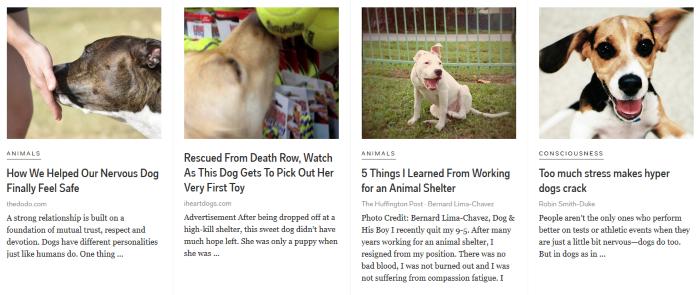 flipbpoard dog news
