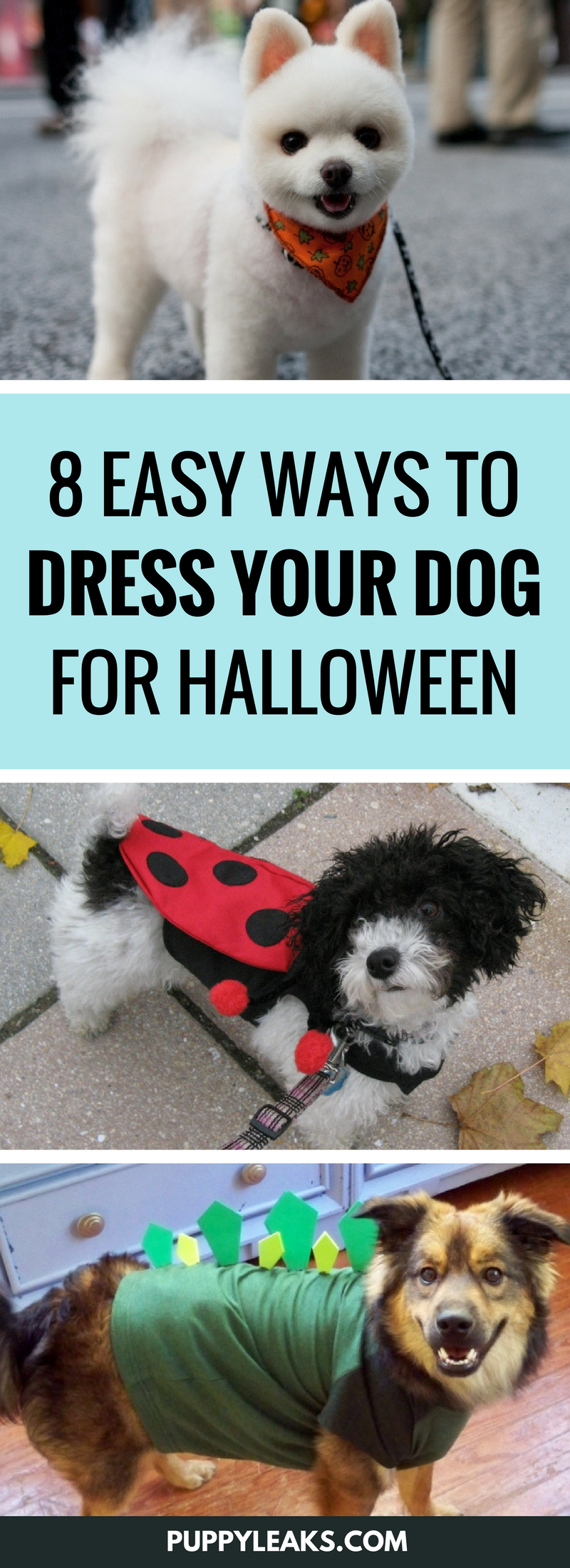 8 Easy Ways to Dress Your Dog For Halloween