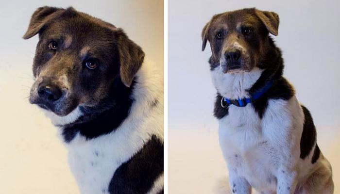 sweet & shy dog needs new home