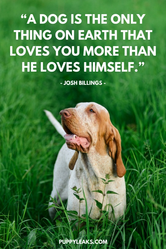 60 Of The Best Dog Inspired Quotes Puppy Leaks Delectable Quotes About Dogs Love