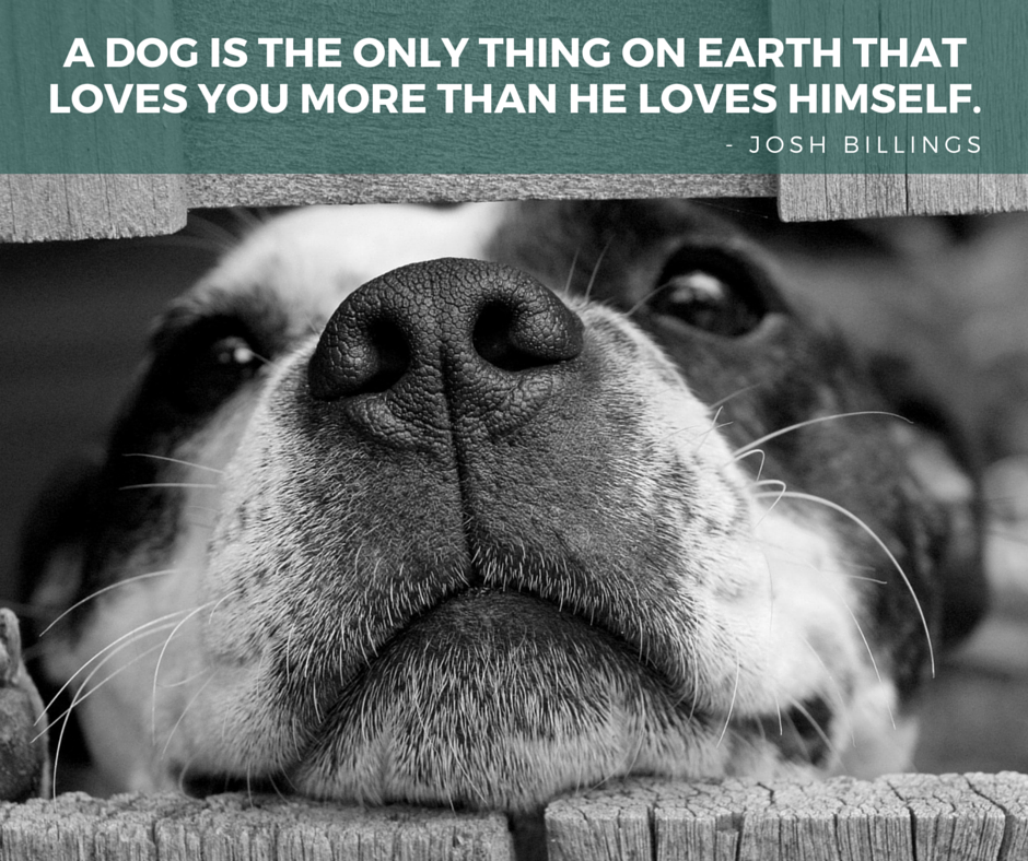 75 Awesome Dog Inspired Quotes