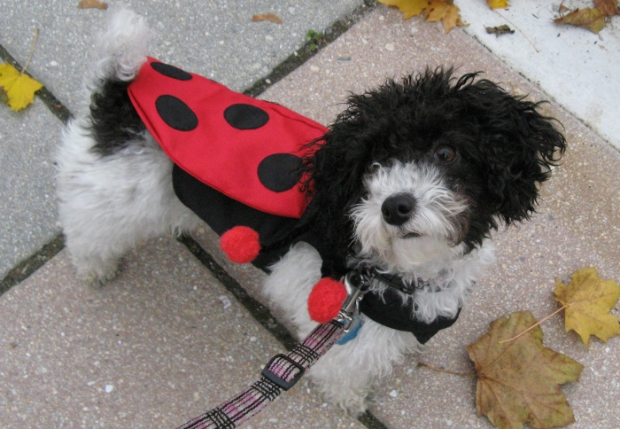 Jockey Halloween Costume For Dogs
