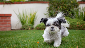 favorite dog articles of the week, roundup 35