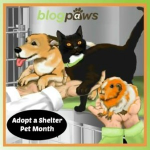Adopt a shelter pet month