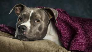 Latest dog news, deals & videos