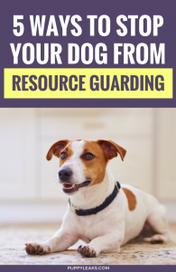 5 Ways to Stop Your Dog From Resource Guarding