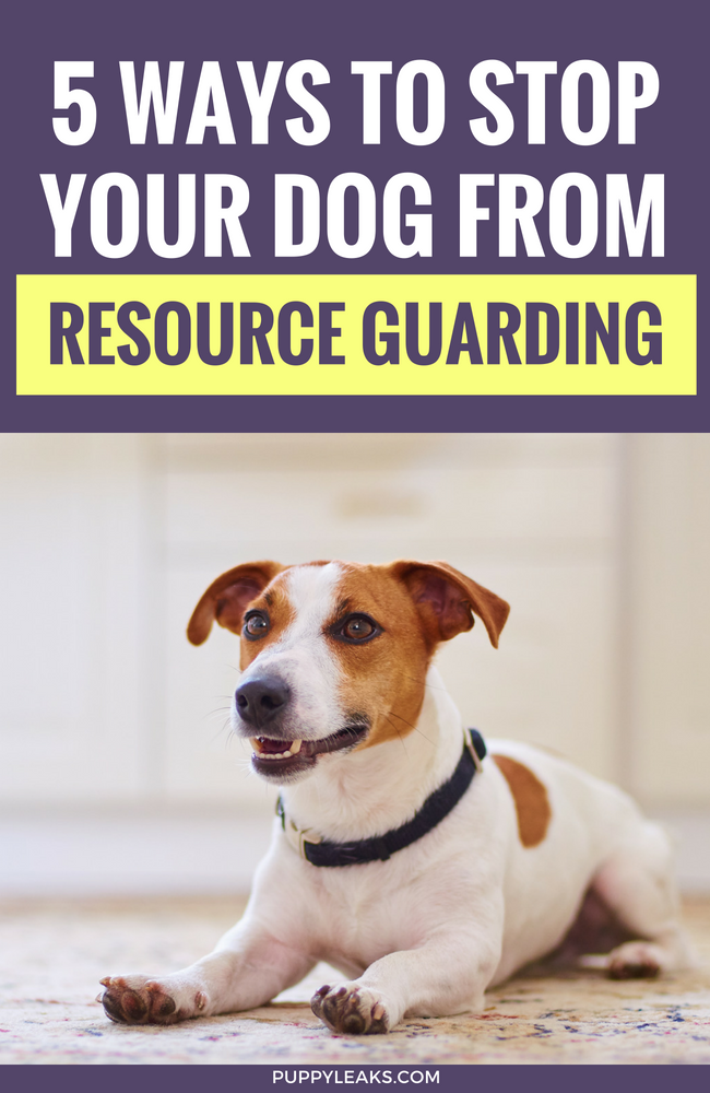 Does your dog growl or get upset when you come near his food or toys? It's called resource guarding, and it can be a difficult behavior to manage. Here's 5 methods that will decrease resource guarding in your dog. #dogs #puppies #dogtraining #puppytraining