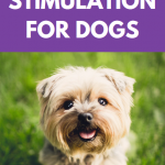 Benefits of mental stimulation for dogs