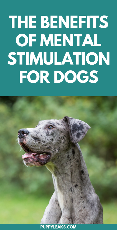 The Benefits of Mental Stimulation for Dogs