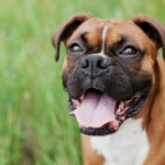 12 Cool Things Science Taught Us About Dogs This Year