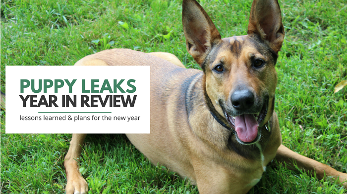 Puppy Leaks - A Year in Review