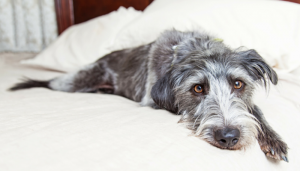 The Importance of Adding Mental Exercise to Your Dogs Routine