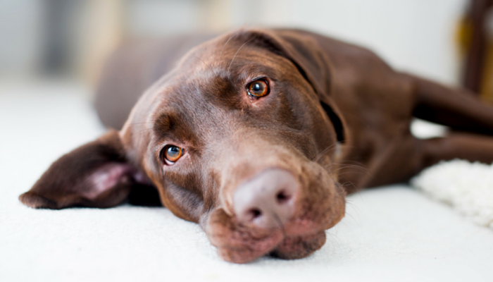 10 Dog Training Tips I'm Tired of Hearing