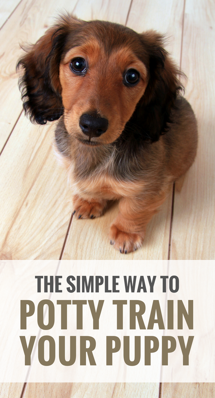 How to potty train your dog. 5 tips for potty training your puppy.