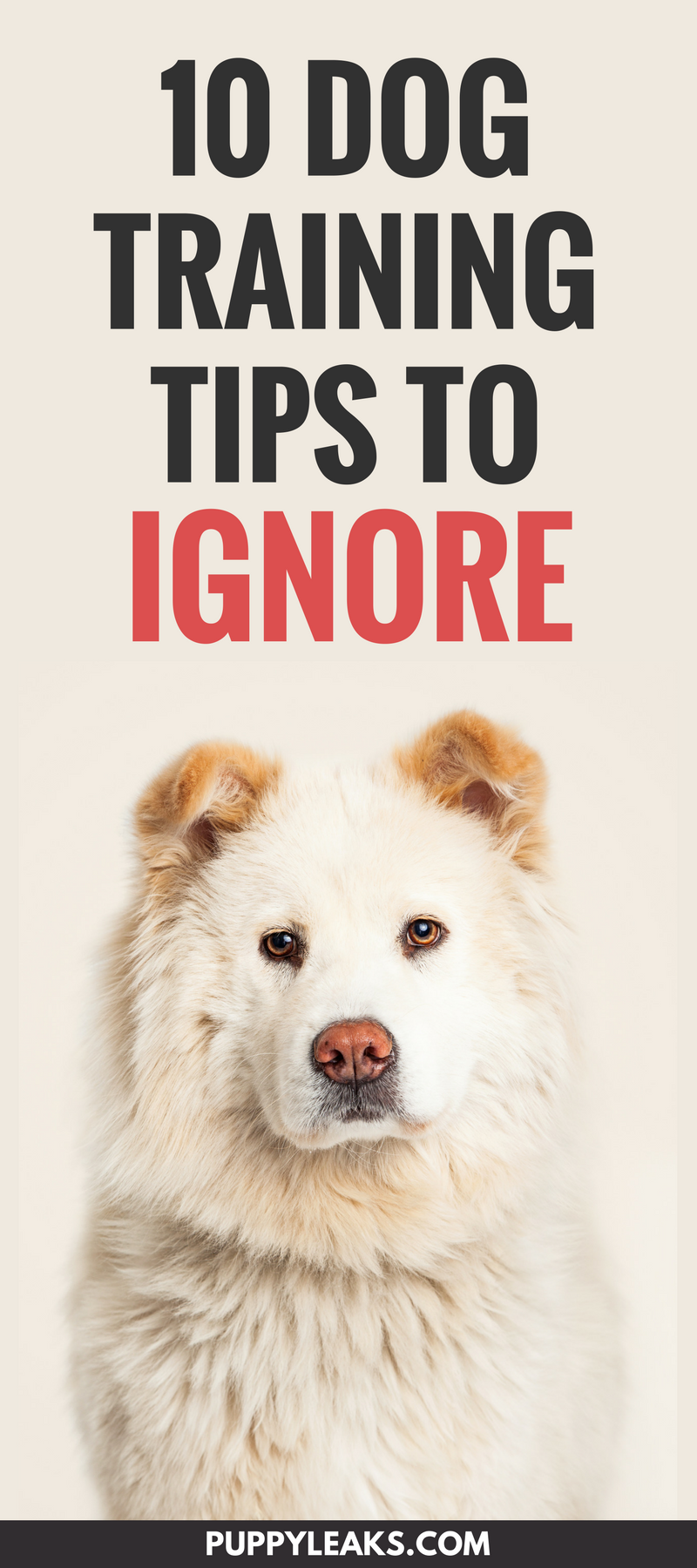 10 Dog Training Tips to Ignore