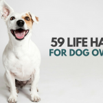 59 Simple Tips & Tricks All Dog Owners Should Know