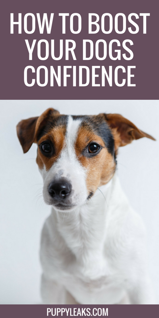 5 Ways to Boost Your Dogs Confidence. How training can help boost your dogs confidence.