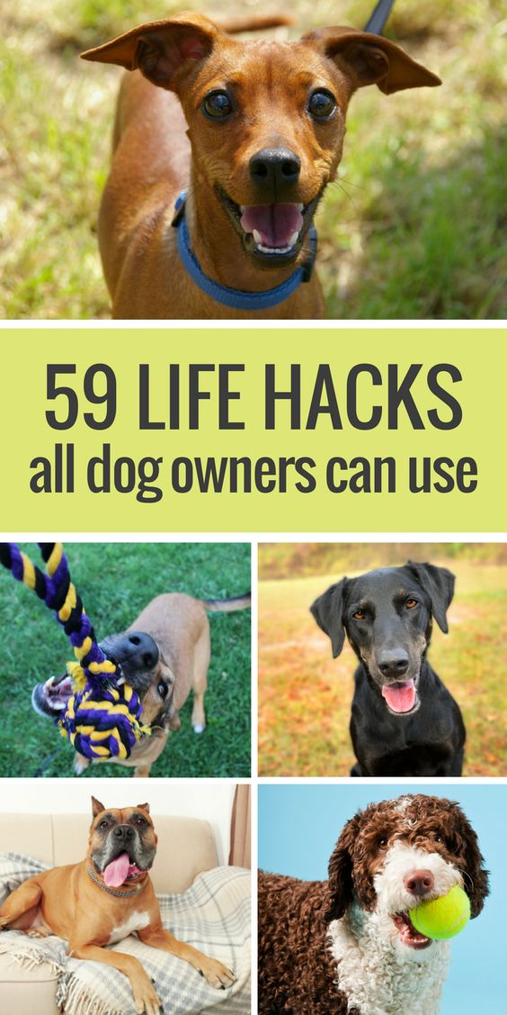 Here's 59 simple life hacks for dog owners. From cleaning up dog hair with rubber gloves to making your own dog bed out of an old sweatshirt & pillow, here's 59 life hacks all dog owners should know.