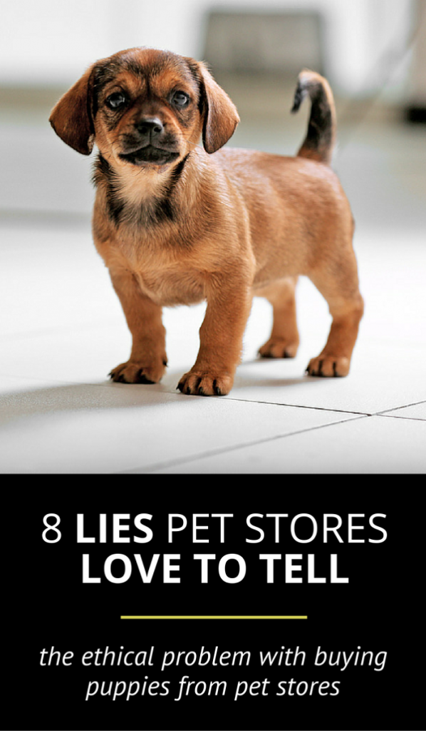 Dont Be Fooled 8 Harmful Lies Pet Stores Love To Tell Puppy Leaks