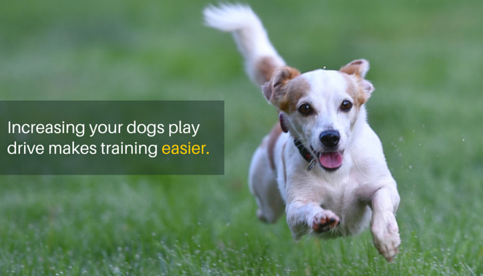 3 Simple Ways to Increase Your Dogs Play Drive