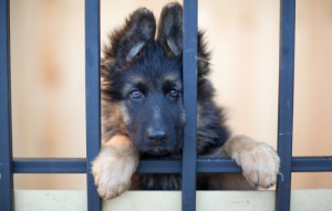Don't Be Fooled: 8 Harmful Lies Pet Stores Love To Tell