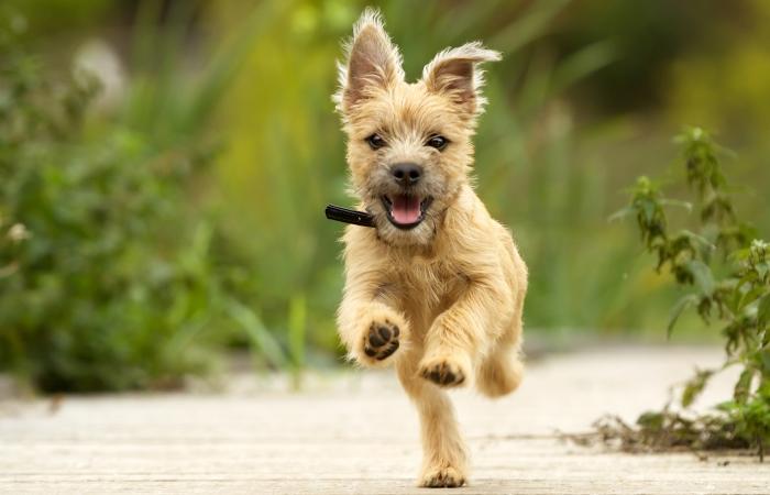Do Dogs Get Diarrhea From Running