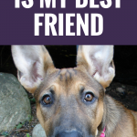 19 Reasons Why My Dog Is My Best Friend
