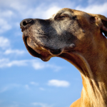 Research Proves That You Can Teach Your Old Dog New Tricks