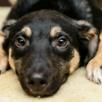 Why I Won't Bad Mouth Rescues, Even if I Don't Like Their Adoption Policies