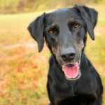 5 Everyday Habits That Help Keep Your Dog Fit