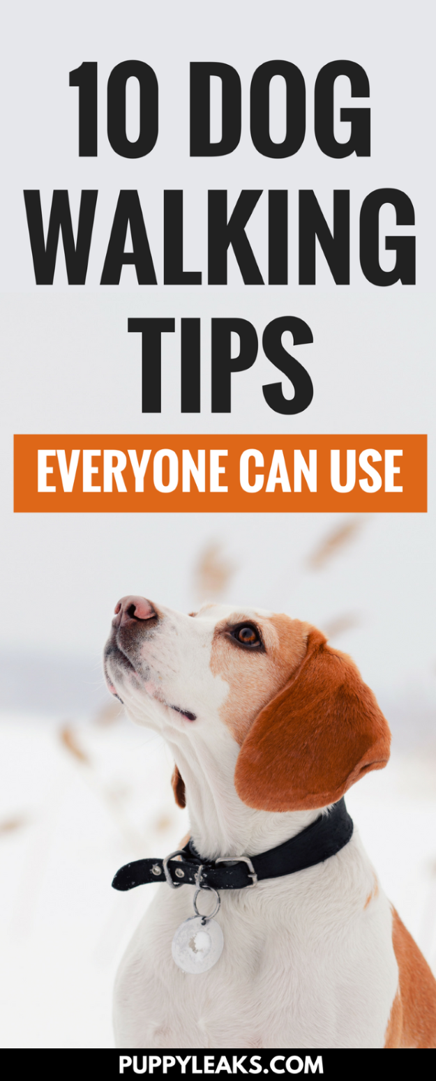 Does your dog pull on his leash? Do you walk your dog everyday but want to make it more enjoyable? Here's 10 simple dog walking tips everyone should know. These tips will make your walk safer, smoother, and more enjoyable for both you and your dog. #dogs #puppies #dogtraining #puppytraining