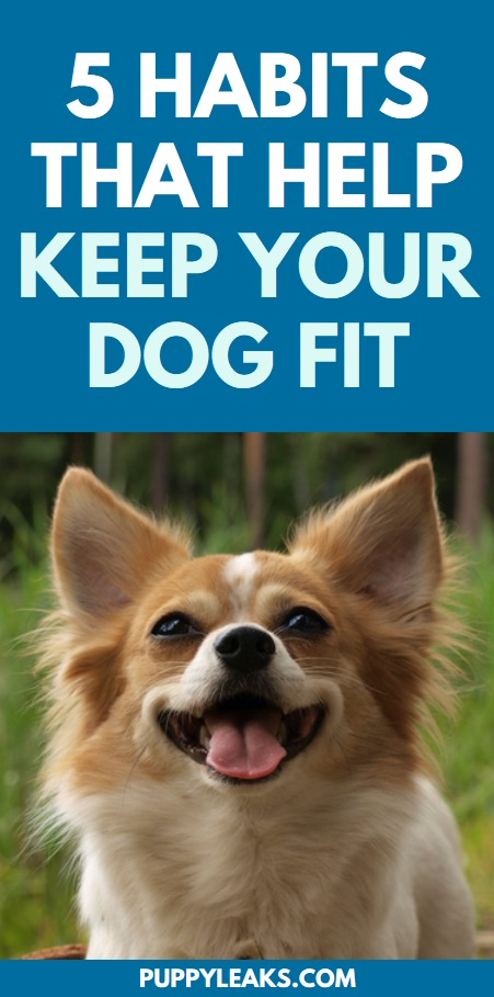 Habits that keep dogs fit