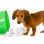 3 Easy Ways to Keep Your Dog Out of The Trash Can
