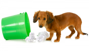3 Ways to Keep Your Dog Out of the Trash
