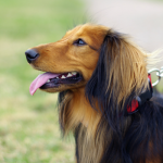 10 Simple Dog Walking Tips Everyone Should Use