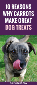 10 Reasons Why Carrots Make Great Dog Treats