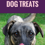 10 Reasons Why Carrots Make Great Dog Treats