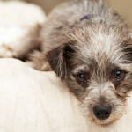 10 Ways to Help Keep Your Arthritic Dog Comfortable