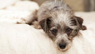 10 Ways to Help Keep Your Arthritic Dog Comfortable